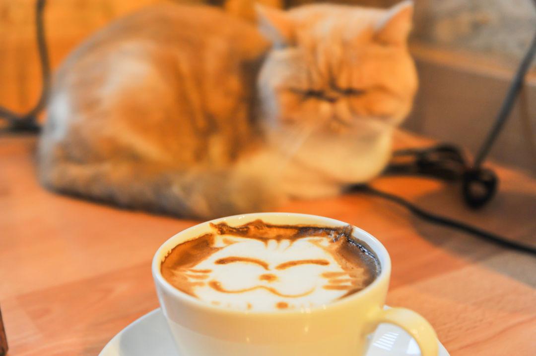 Cat Coffee Cafe
