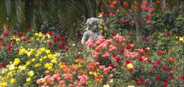 Ringling museum rose garden kj6r4k