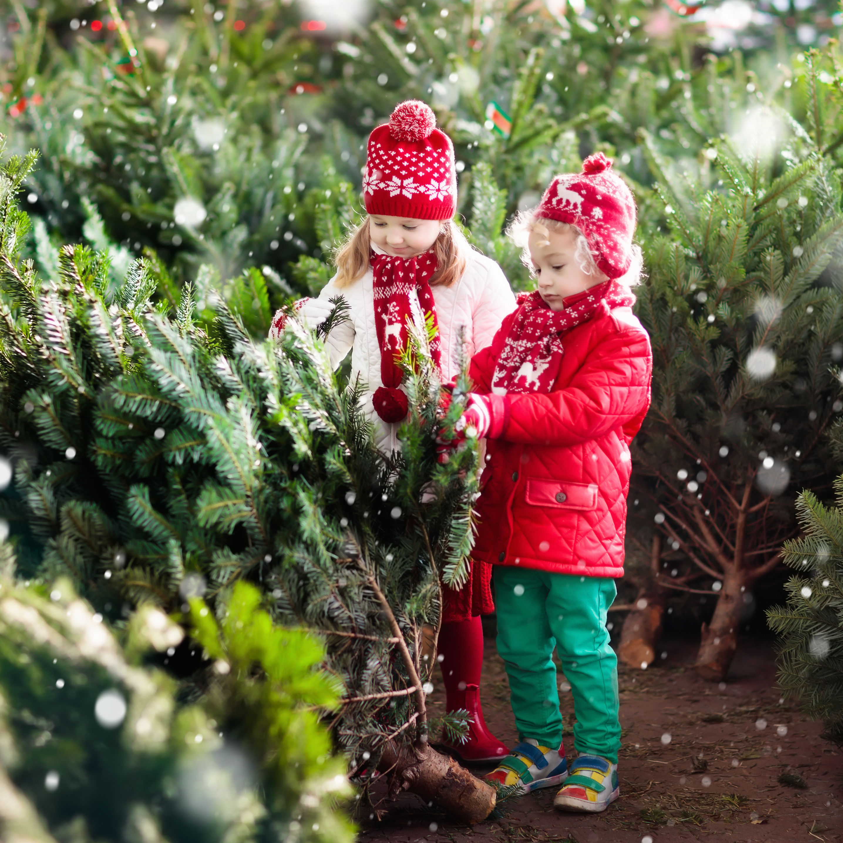The Real Christmas Tree Farm: Portland's 10 Best Airbnb Rentals