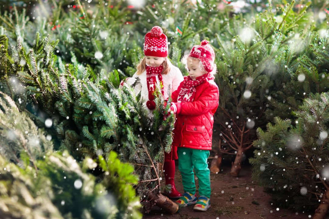 9 U-Cut Christmas Tree Farms Within 90 Minutes Of Portland