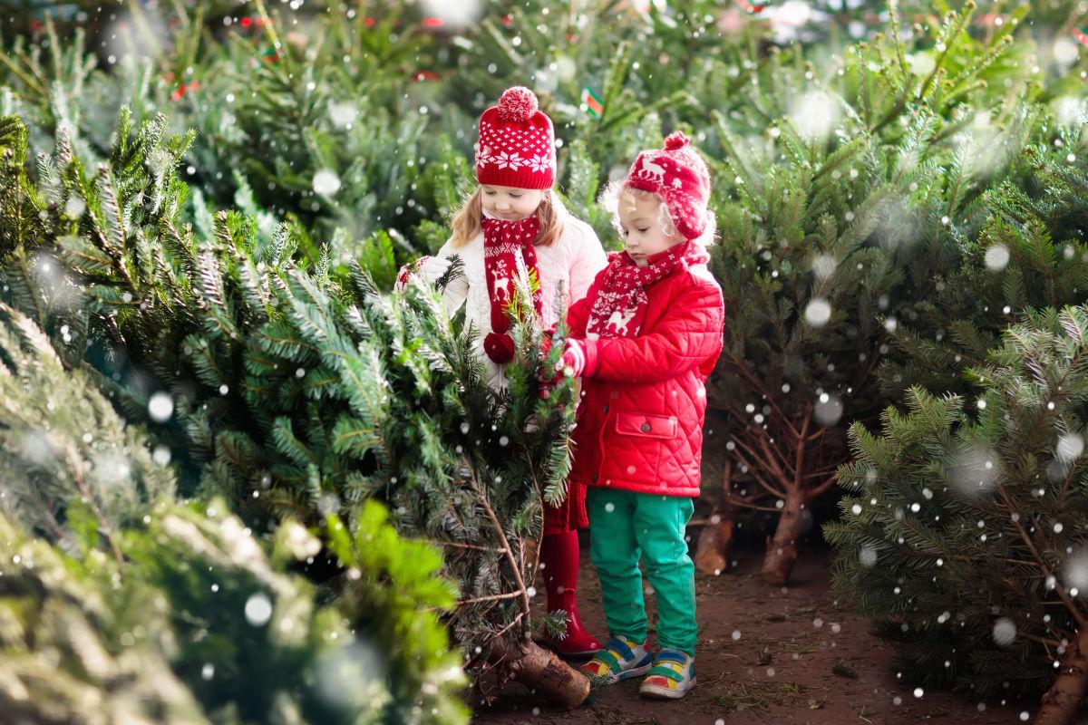 9 U-Cut Christmas Tree Farms Within 90 Minutes Of Portland
