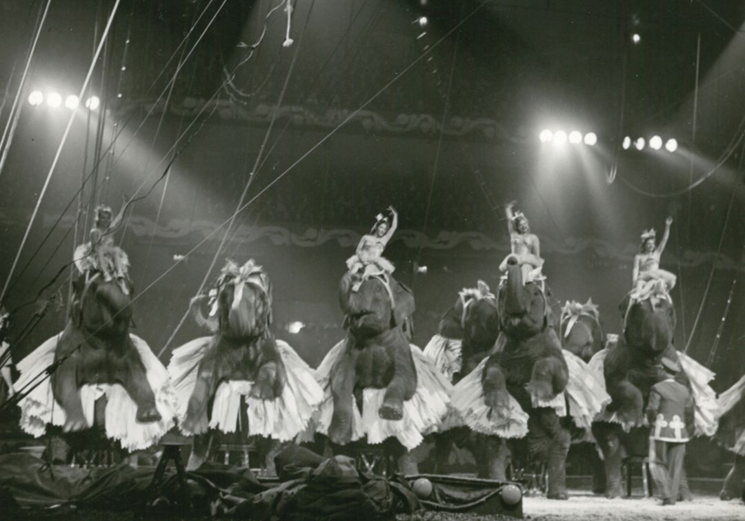 Elephants and dancers in the ring
