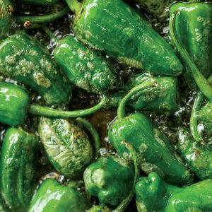 0914 padron peppers o2r42w bvvdkl