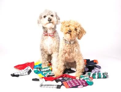 Posie puppies crop for website gwmxlb