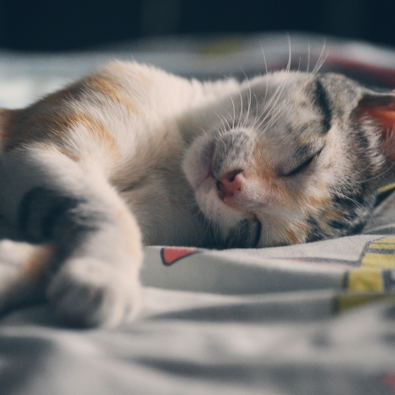 Cat jdmmrj