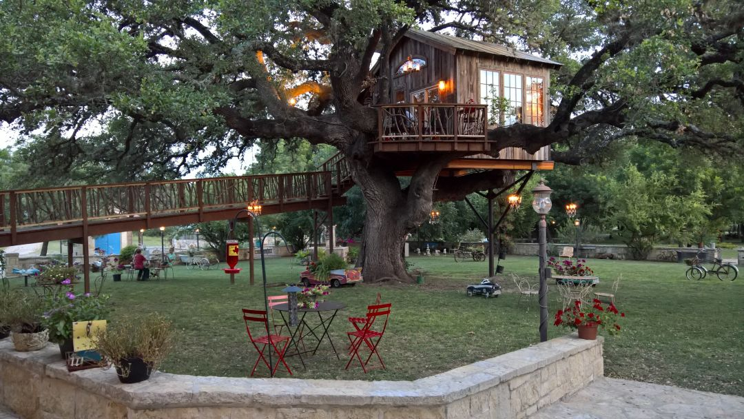 Laurel tree treehouse calauj