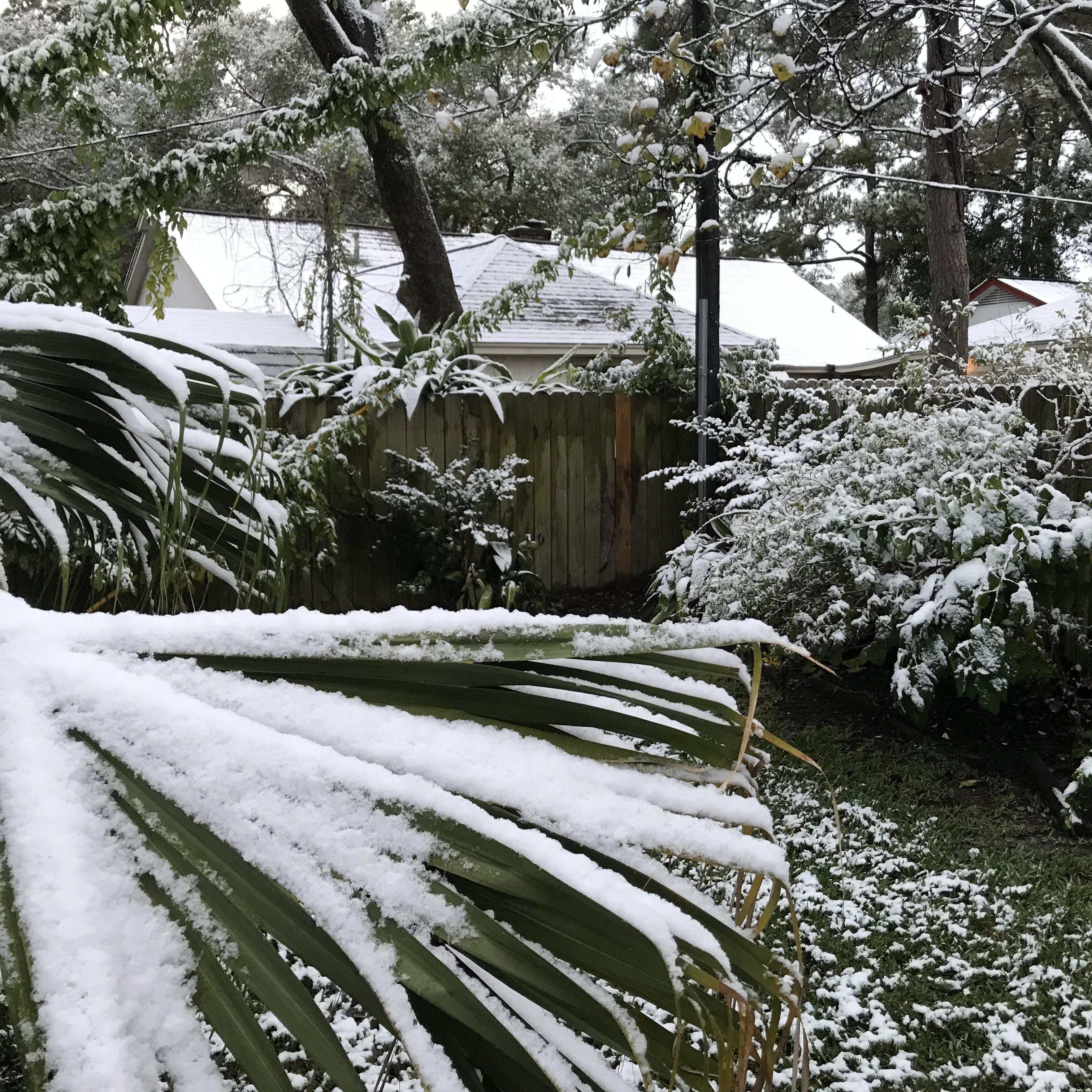 Snow dordmo