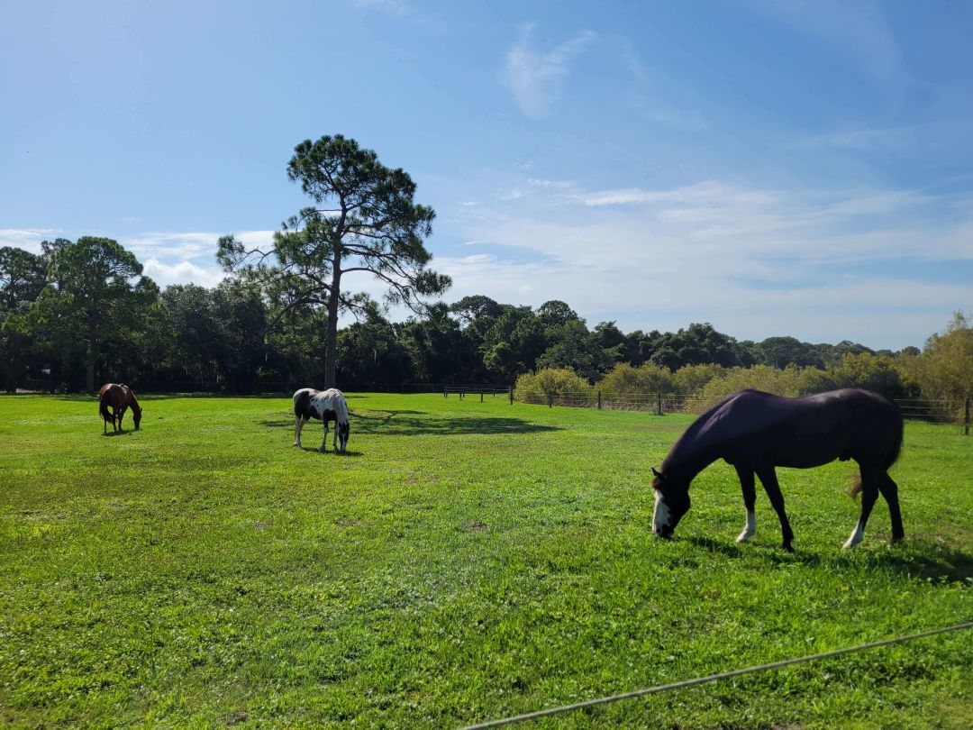 InStride Equestrian Center therapy horses