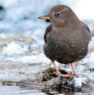 0714 fauna finder bird xjvyam
