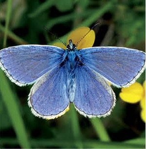 0714 fauna finder butterfly swgby6