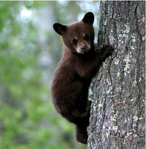 0714 fauna finder bear enkp3m