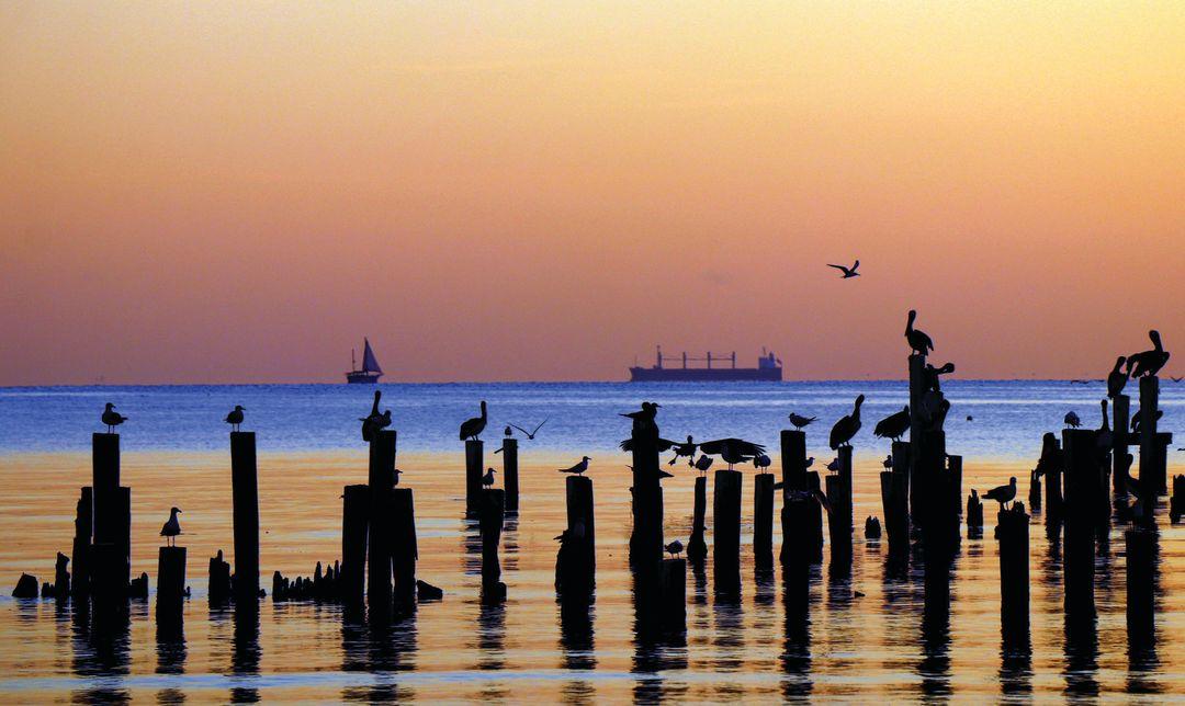 How Healthy Is Galveston Bay in 2019? | Houstonia
