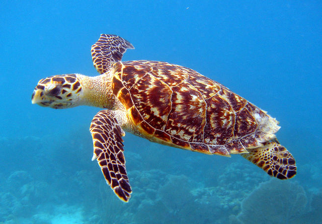 Sea turtle egng4r