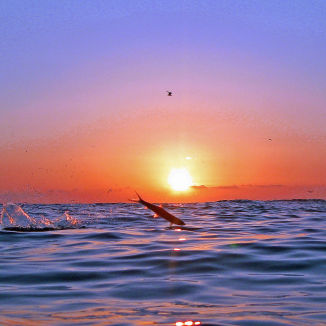 Sun fish resize ym60wy