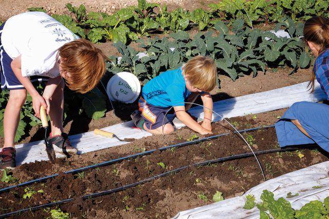 Pcsu 16 community garden 1 xtfiif