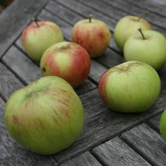 Apples smarter fritter gg0jva