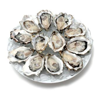 Oysters bz1z3q