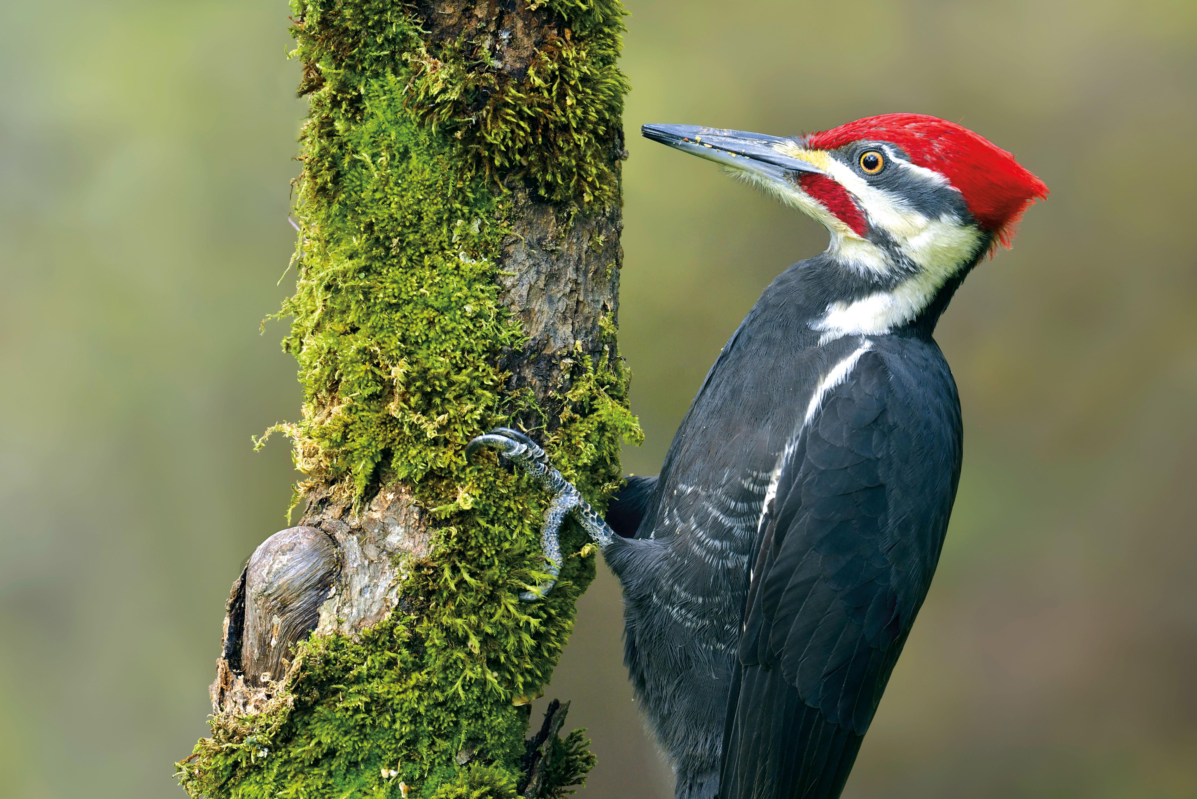 0617 forest park woodpecker soudju