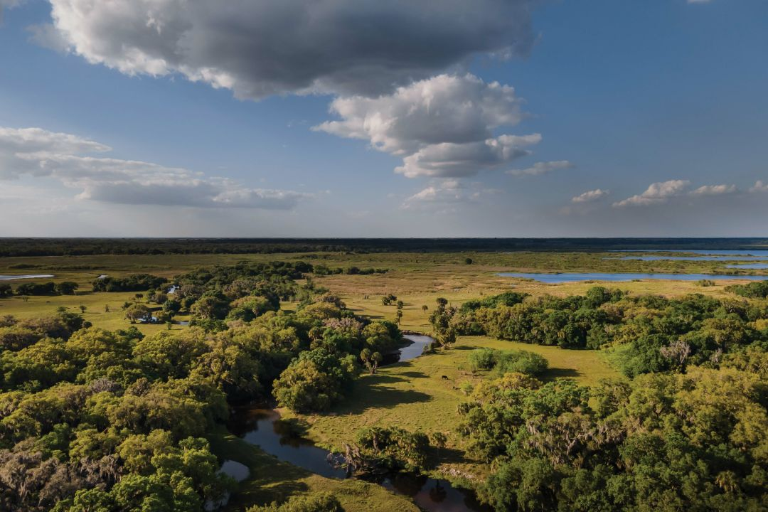 Triangle Ranch protects the quality and flow of water around the Myakka River.