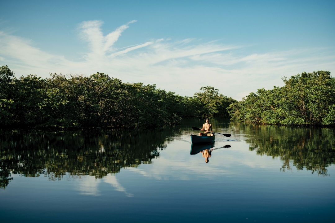 Canoeing through a mangrove forest