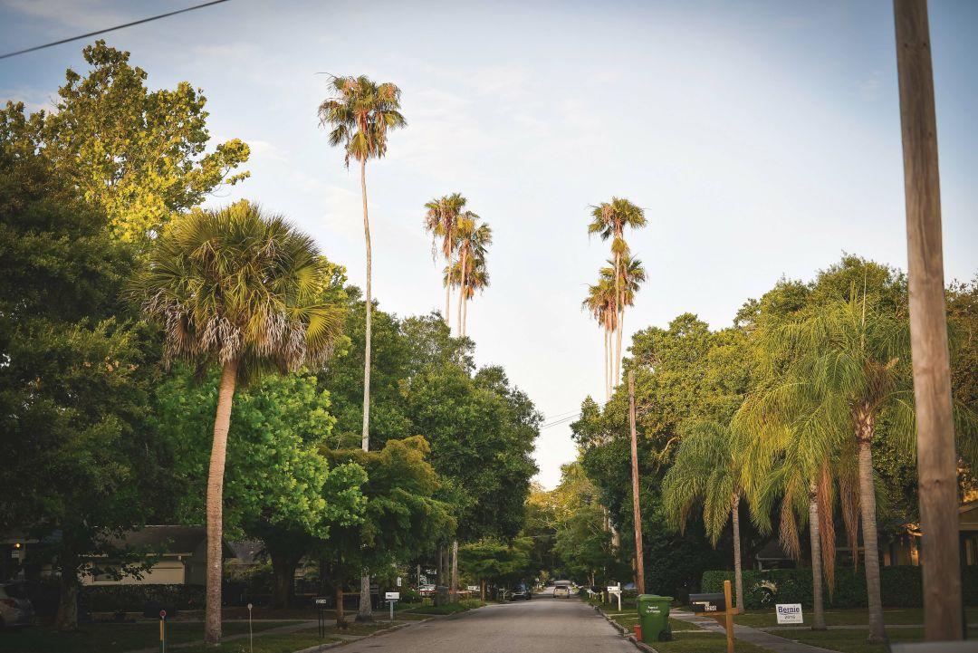 A tree-lined street in Arlington Park