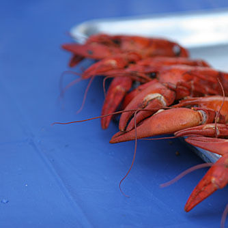 Crawfish festival rxtfvj