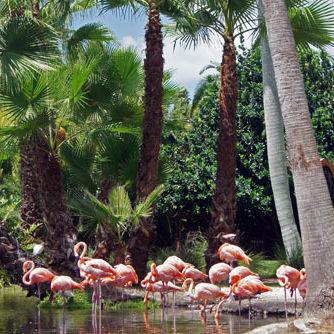 Flamingosnice625x fhkfj3