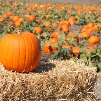 1012 pumpkin portland food k2y69m