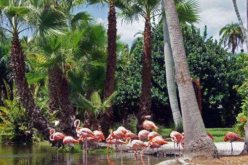 Flamingosnice600 sm bf8g16