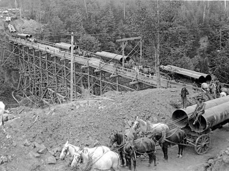 1895 orhi 35386 horses   pipe flfwch