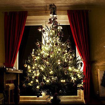 Christmas tree apartment iupnb4
