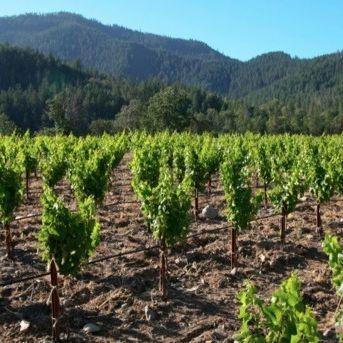 0912 savor southern oregon wine dwtwg6