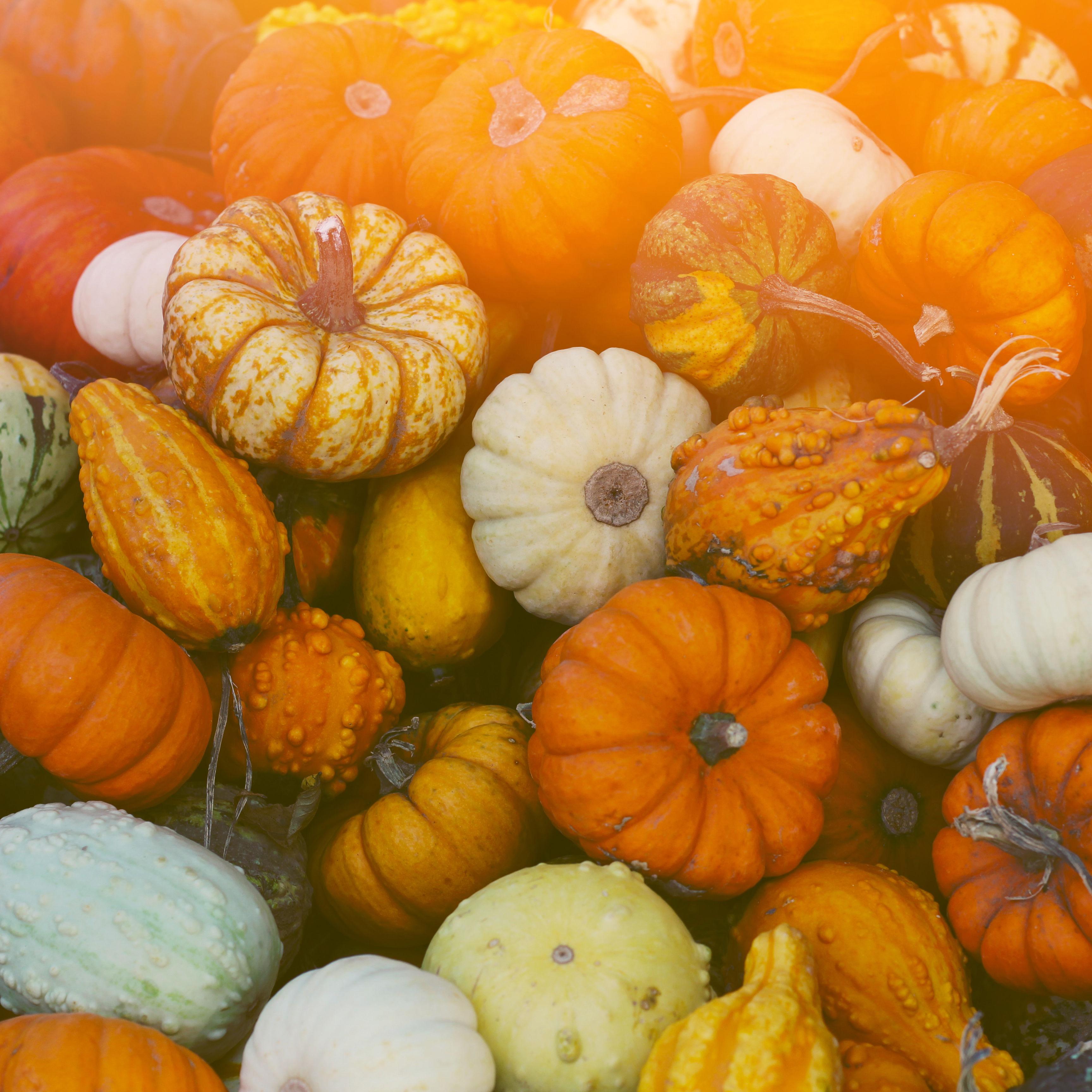 Pumpkins zdiz8o