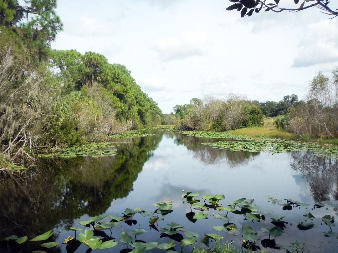 Felts Audubon Preserve in Palmetto