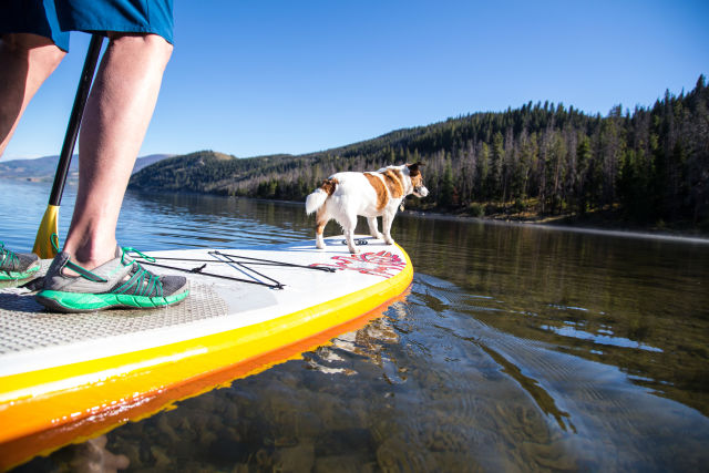 Colorado summit dillon resevoir dog paddleboard summer 2015 a8j1fn