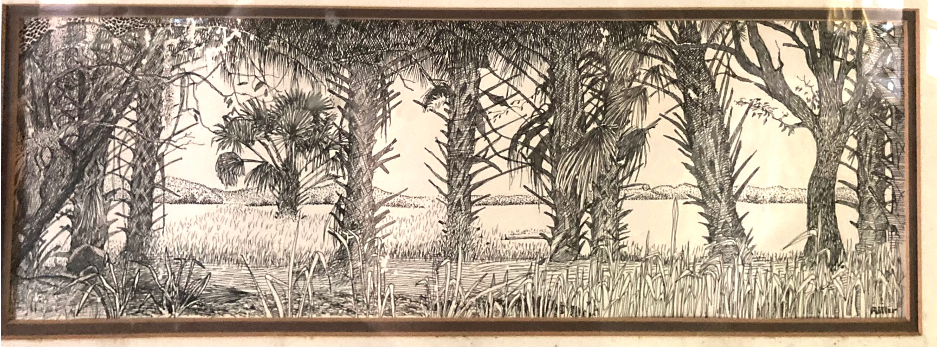 Jono Miller's drawing of cabbage palms