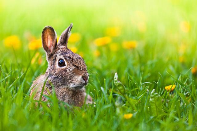 Easter bunny icpkys