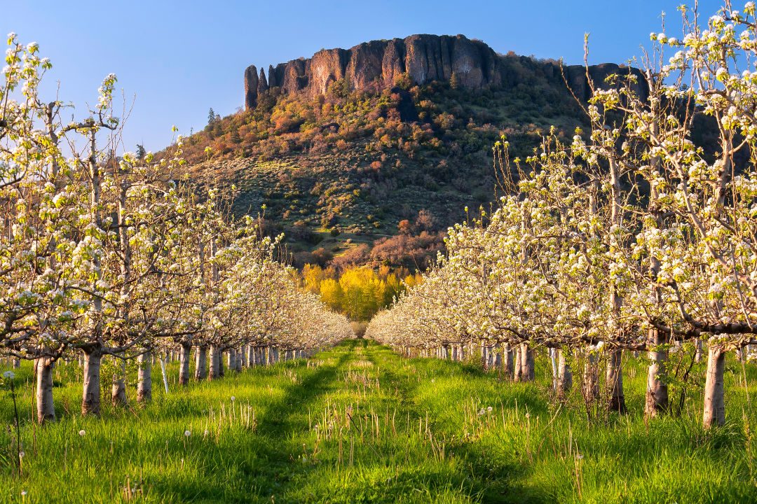 Terrific Top Spots To Hike In Southern Oregon Portland Monthly Home Interior And Landscaping Dextoversignezvosmurscom