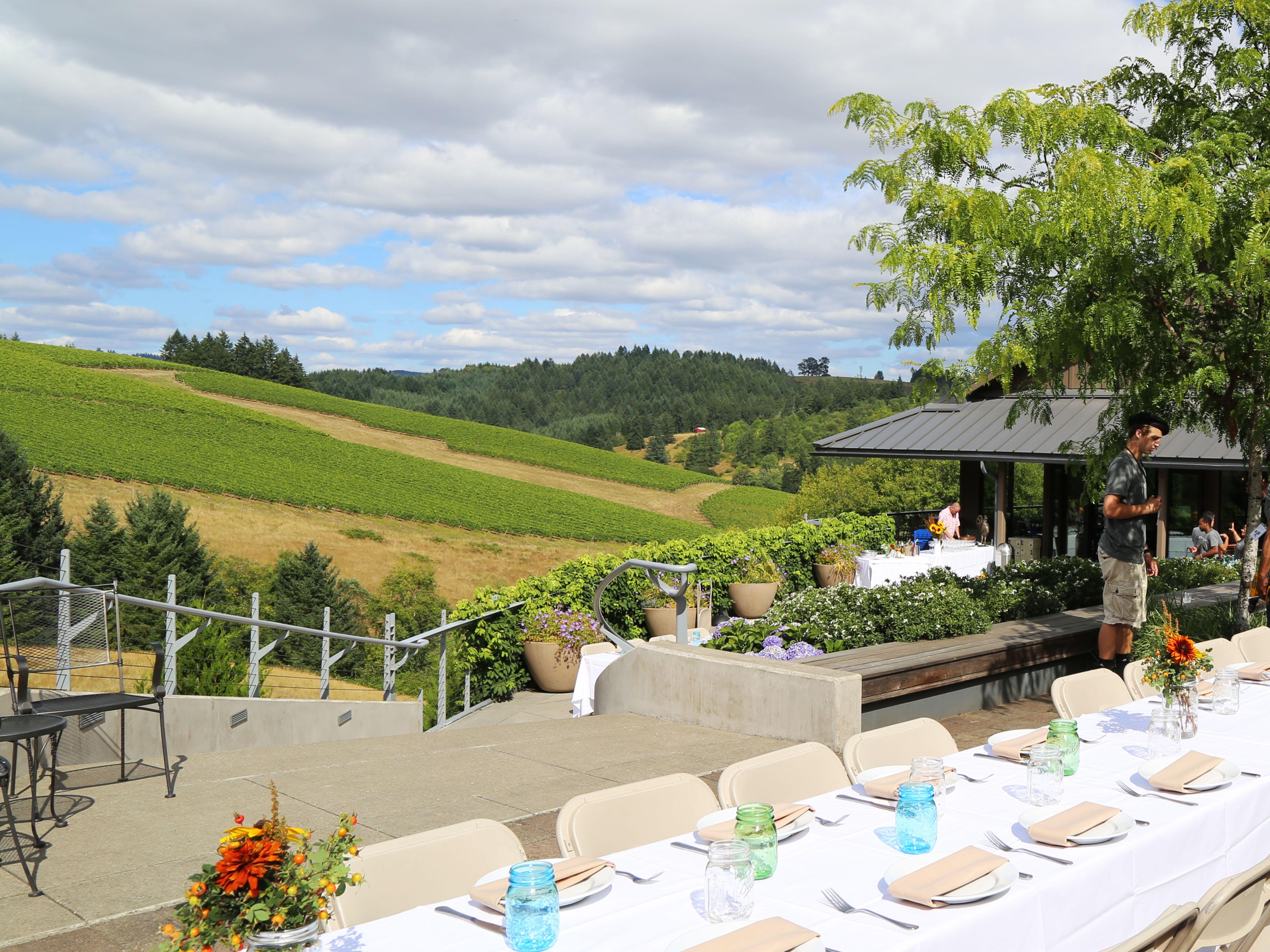 Field vine willakenzie edw04v