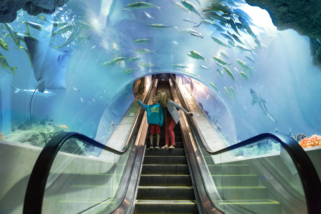 Deep ocean escalator   lauren crites gmoep5