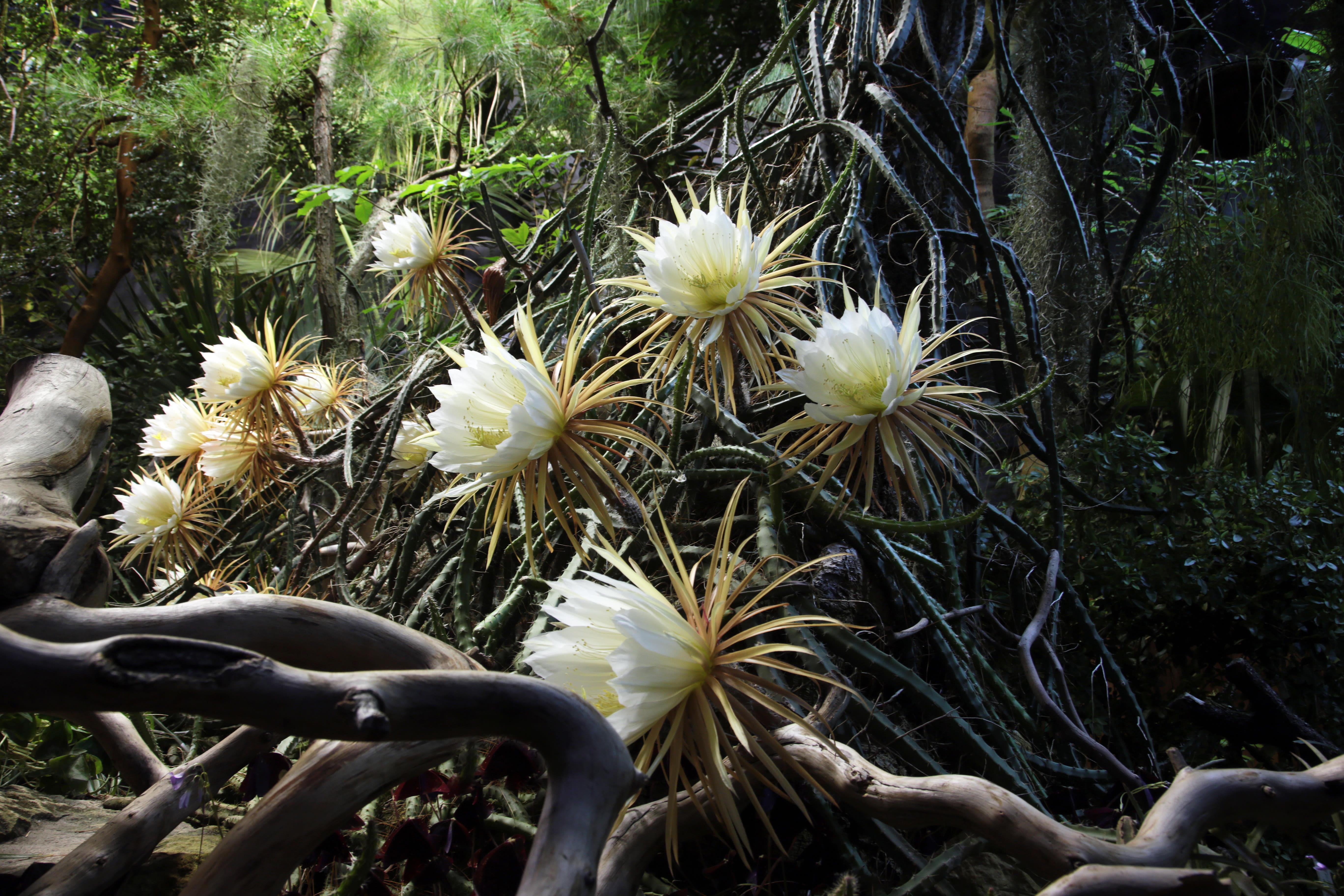 Cactus rxh4nw