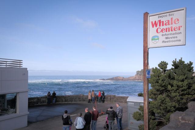 Depoe bay whale center 1 tkoujs
