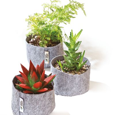 Pomo 0916 trophy case root pouch plants spgb9h