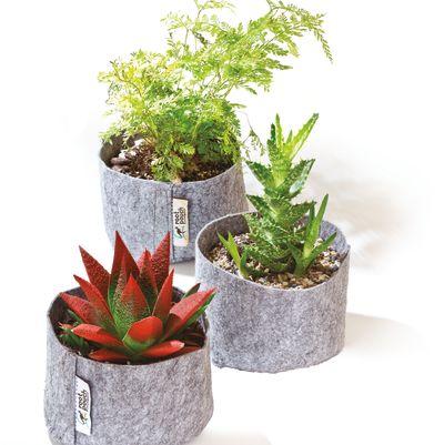 Pomo 0916 trophy case root pouch plants spgb9h