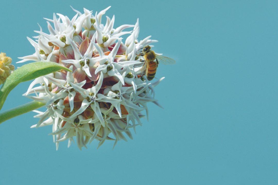 These Native Plants Are Balm To Pacific Northwest Pollinators