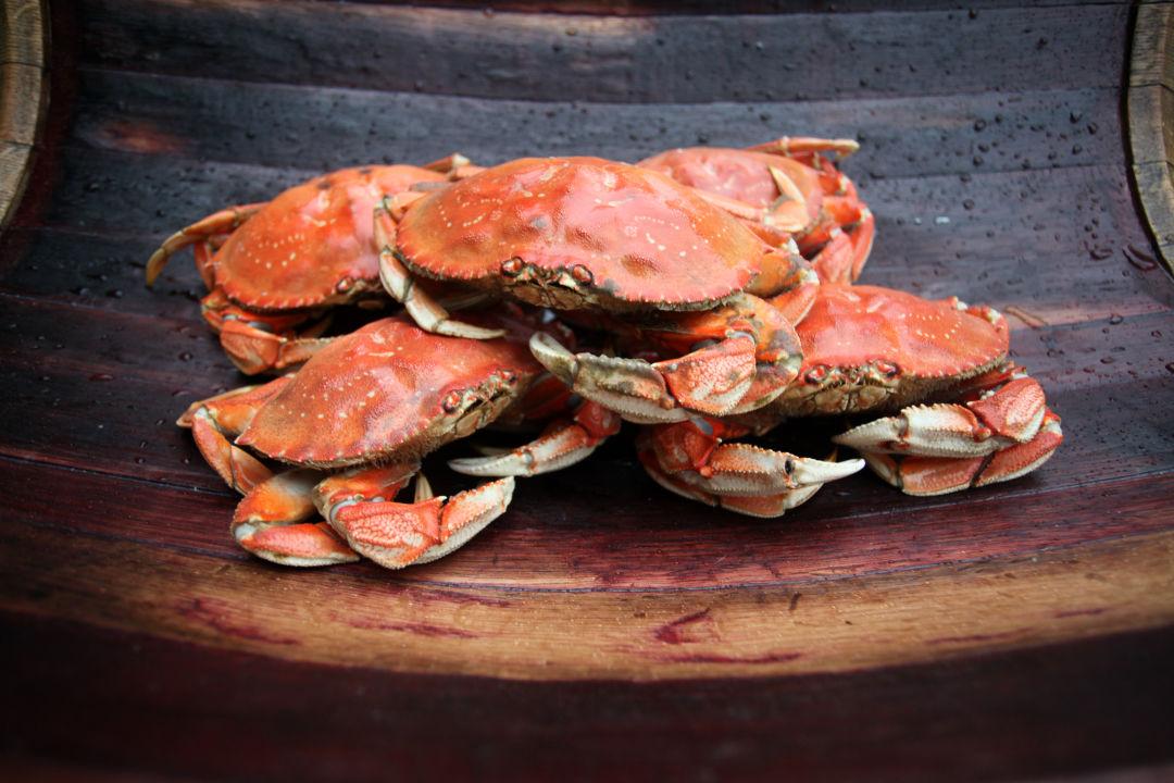 1.crabs pdiwiv