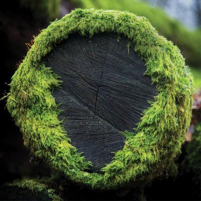 Moss k9lgic