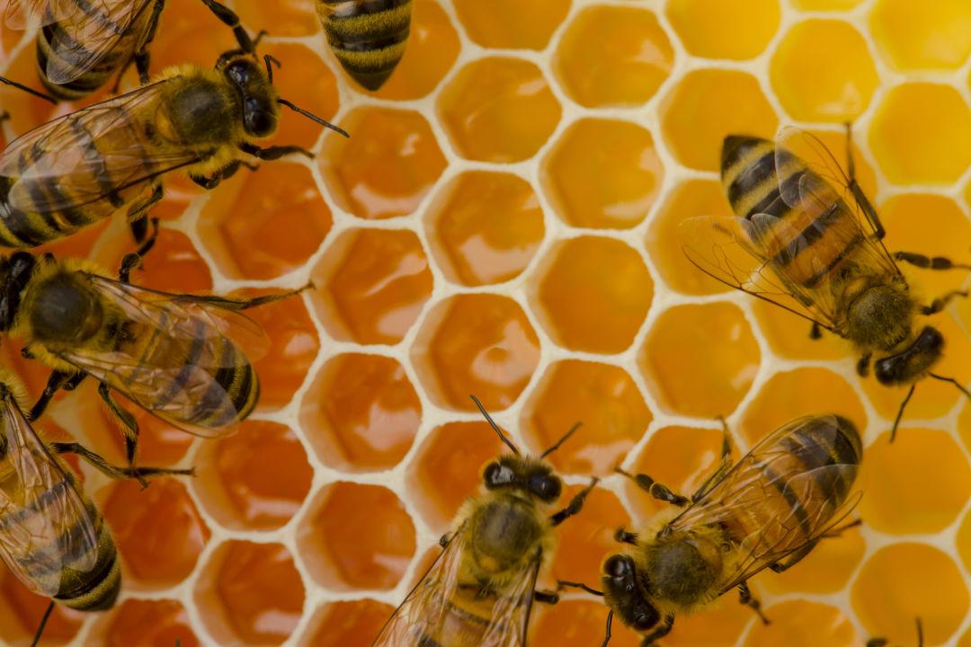 Houston Is Slowly Earning Its Beekeeping Stripes Houstonia Magazine