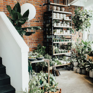 9 Seattle Plant Shops To Create An Indoor Jungle