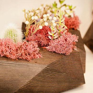 Floresplanters y4fsxy
